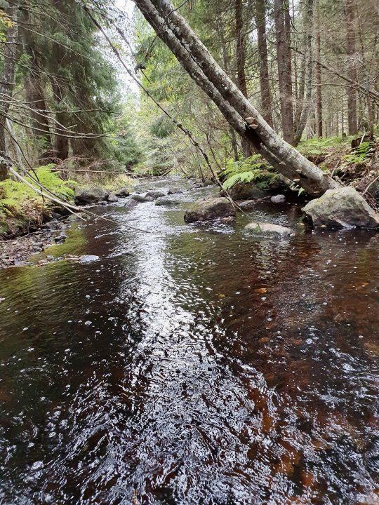 ruisseau aurifère dans le gard